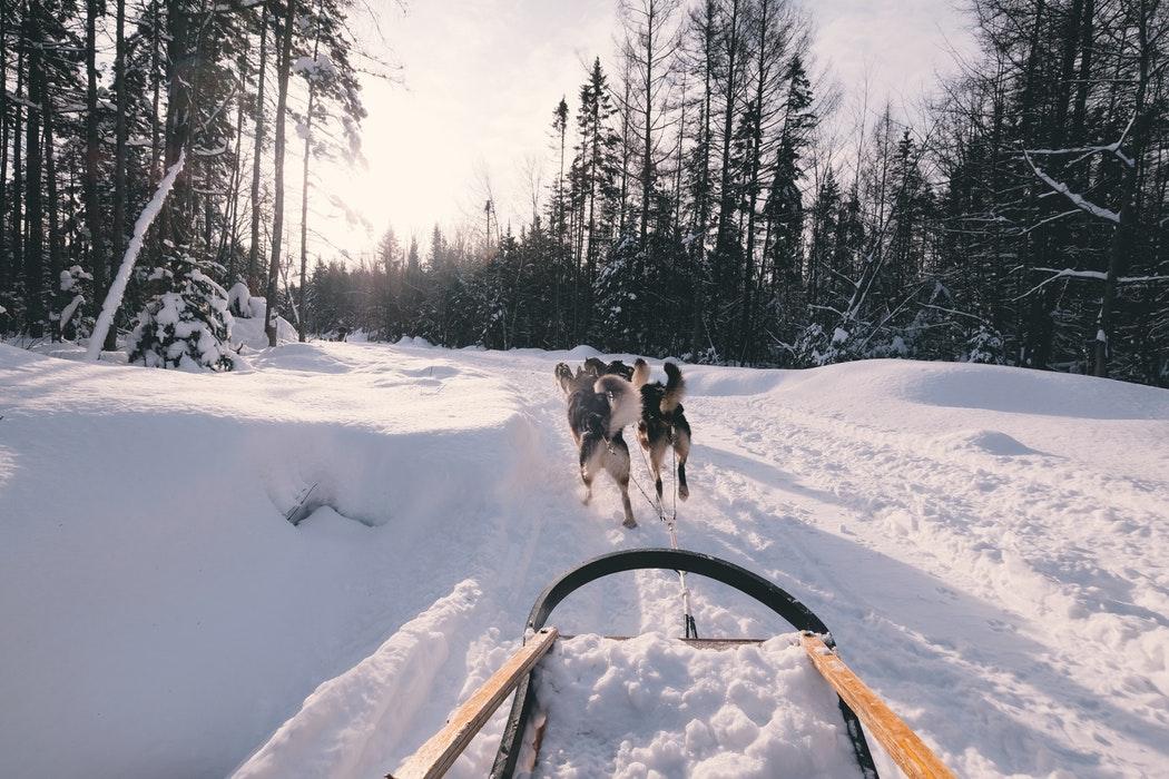 huskies voyage Laponie