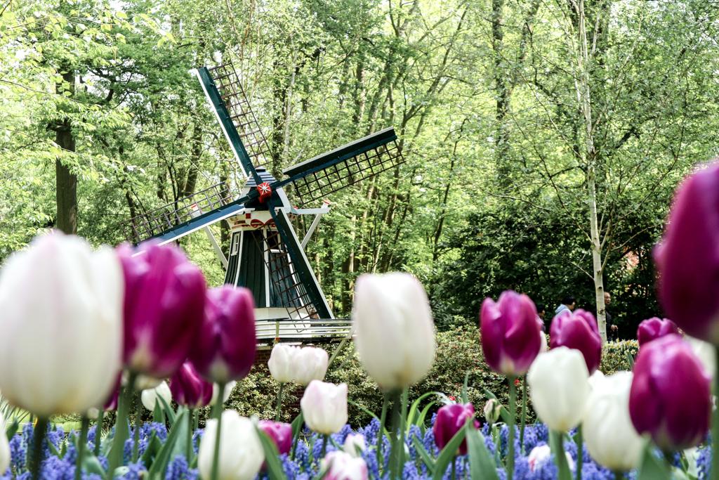 Keukenhof - Pays-Bas